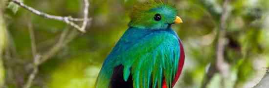 Ubuntu 12.10 named 'Quantal Quetzal' on its way